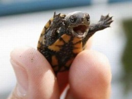 bad day turtle